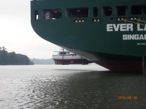 A few scary moments as she is lowered from about three stories up on the hold of the ship