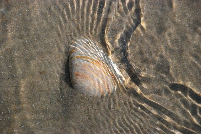 Ripples above Sand and Shell