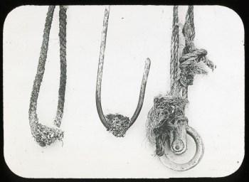 Extraordinary nesting sites of Allen Hummingbird, Undated, by Joseph Mailliard, glass lantern slide, Lantern Slide #60.