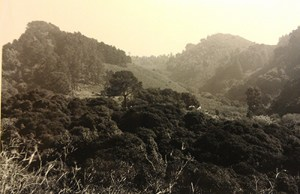 Retake of #7083, Strawberry Creek Canyon, Berkeley California, 1996 March, by Oliver P. Pearson.