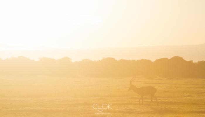 Mt Kenya Sunrise