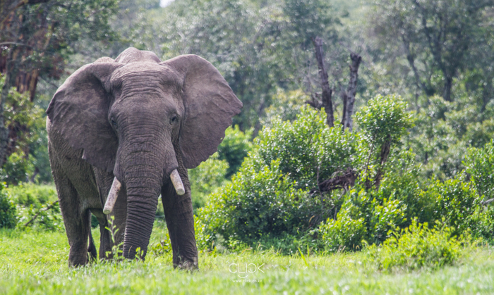 World_Elephant_Day-8