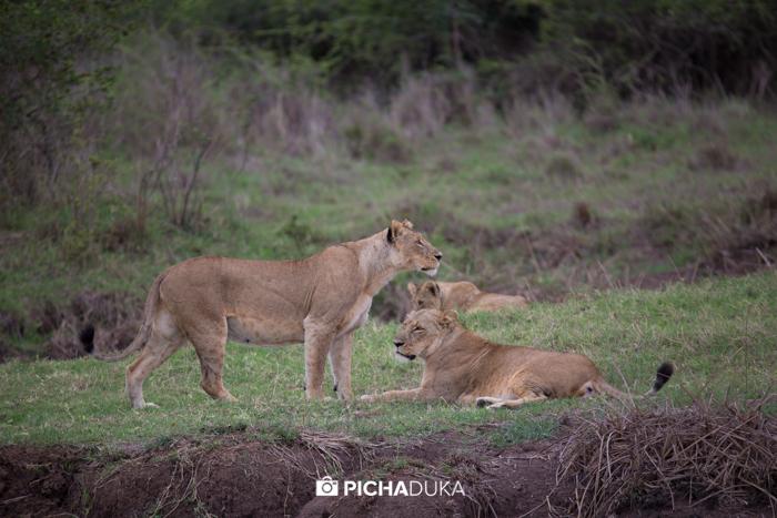 Nairobi_National_Park-100