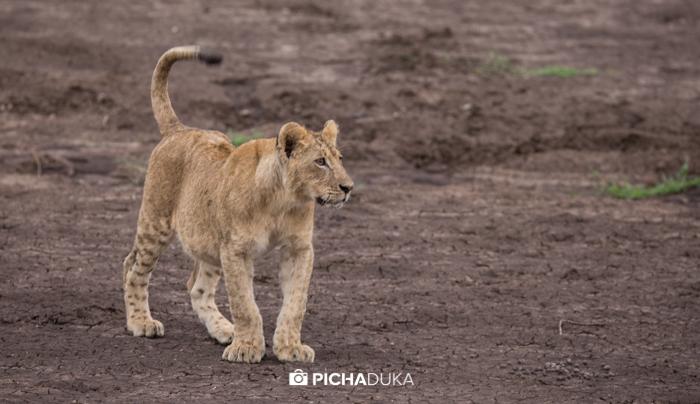 Nairobi_National_Park-103