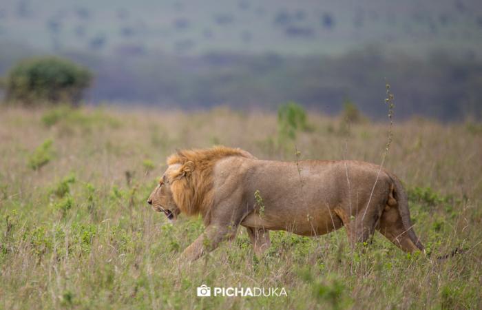 Nairobi_National_Park-112