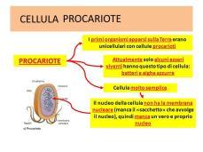 3 CELLULA PROCARIOTE