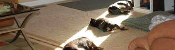 aplacetolovedogs: ellen.warnerbros Four dogs lazily enjoying the sun beam Original Article