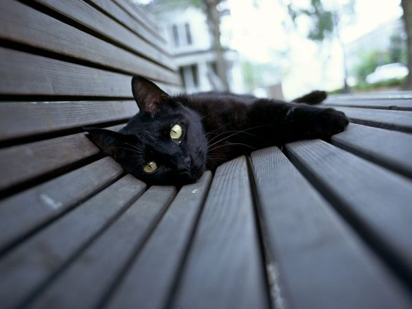 black-cat-eerie_5827_600x450