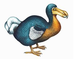 extinct_animals_dodo_bird2