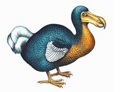 extinct_animals_dodo_bird2