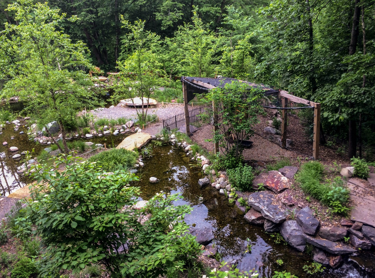 pond and garden area