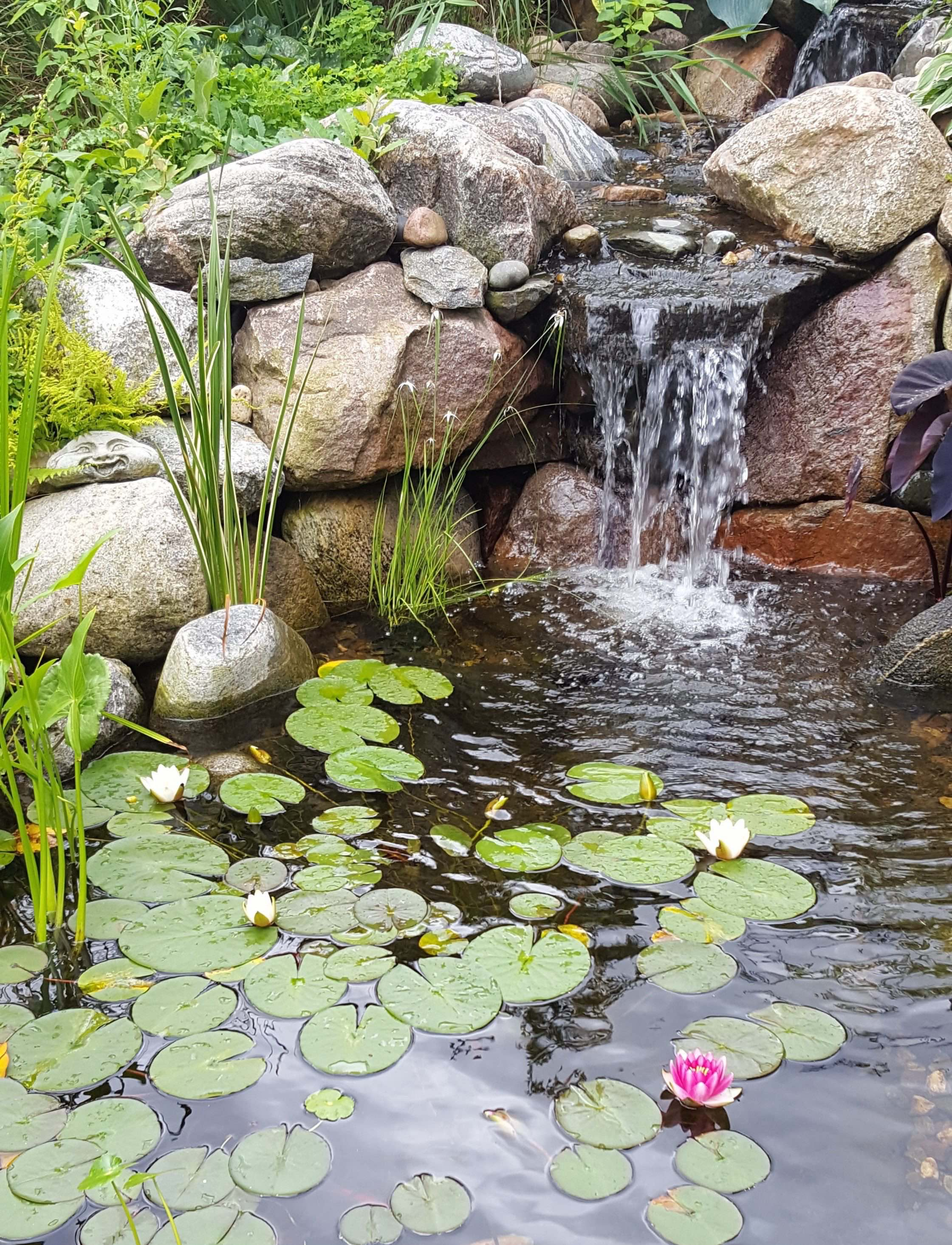 waterfall, pond and water lilies