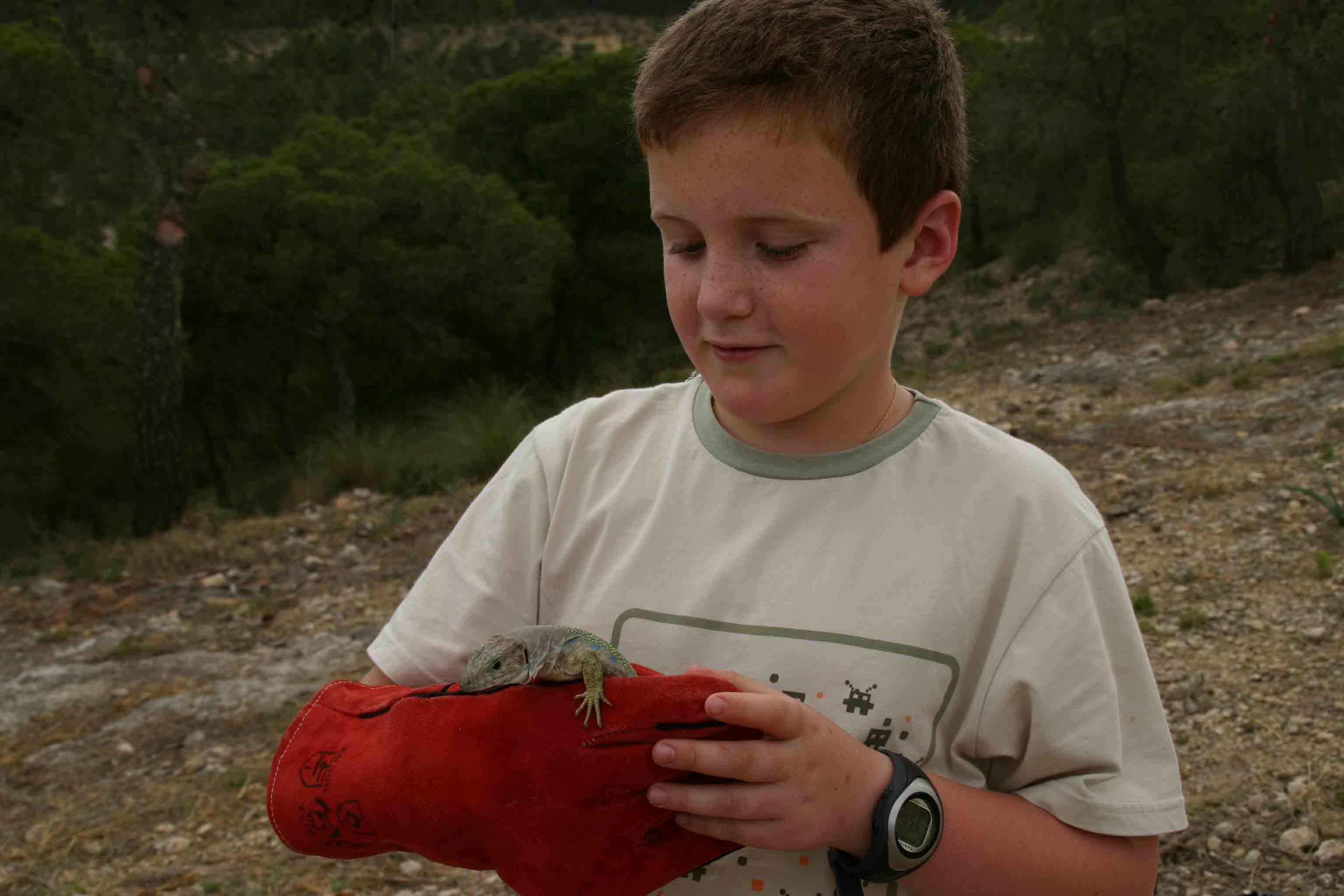 Vicente Jnr having a closeup look at Europes largest lizard
