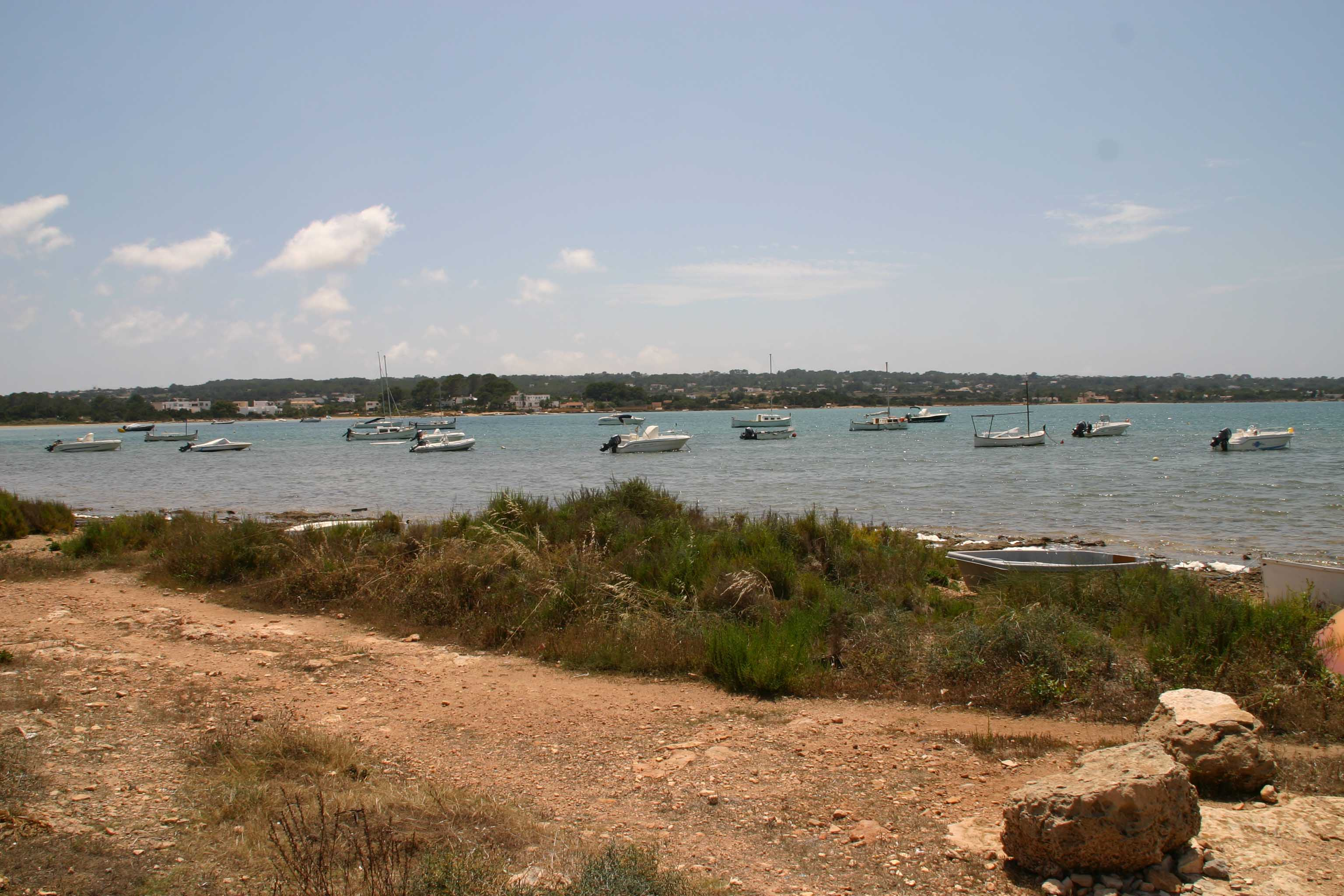Lizard habitat on Formentera