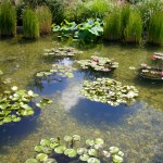 lily pond at the GPC