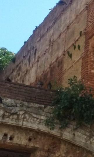 Los Perricos (Parrots)