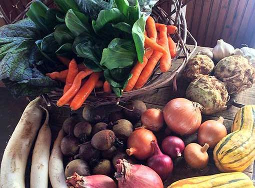The Sweet Rewards of a Winter Harvest
