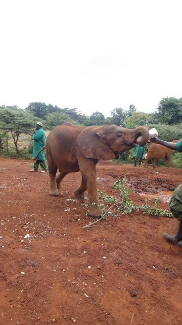 2015-20 1 elephant orphanage