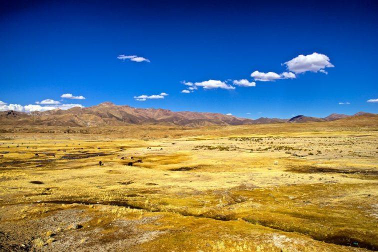 Altiplano mit Lamaherde