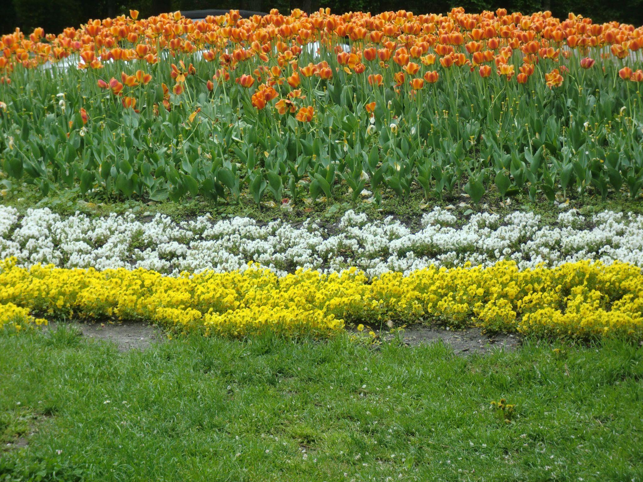 Vienna park 40 1440x1080 - Vienna: elegant beauty