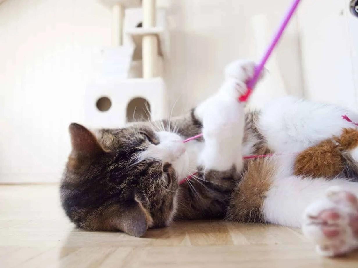 Pesca de gatos – el juguete ideal para gatos