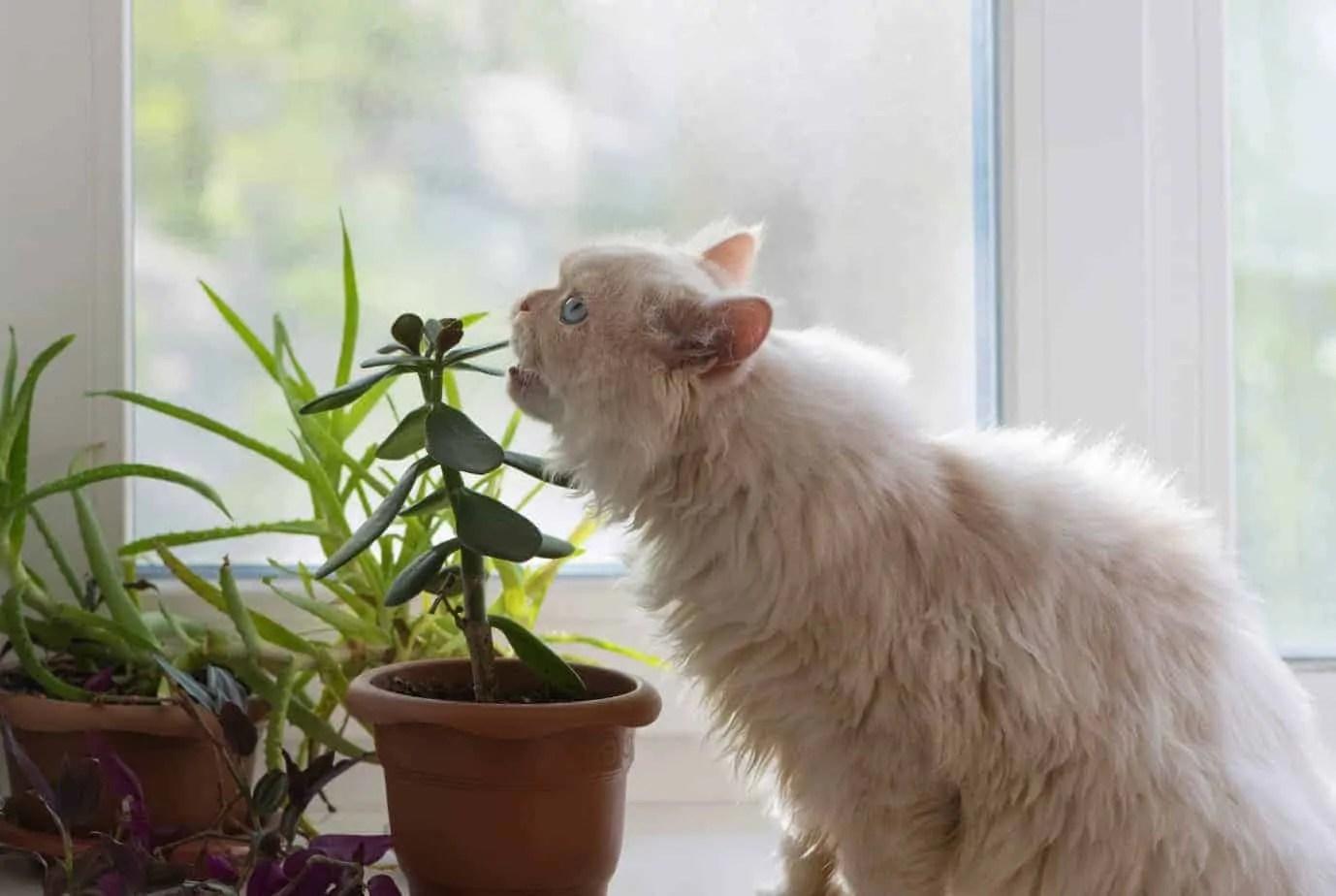 Plantes toxiques pour chats