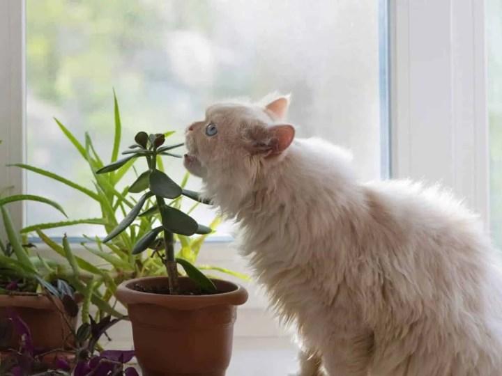Für Katzen giftige Pflanzen und Nahrungsmittel