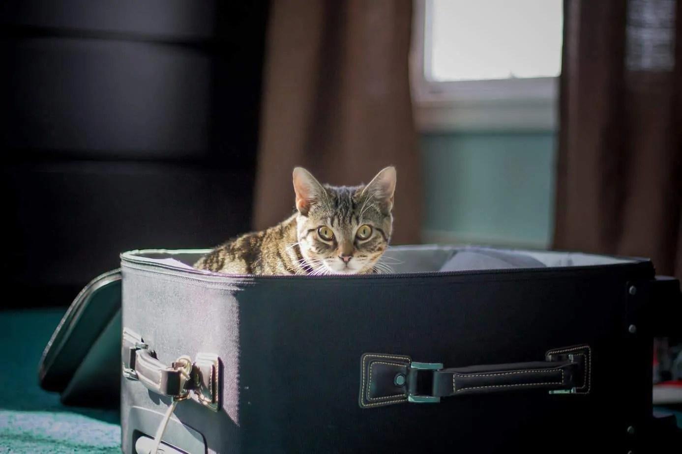¿Qué pasará con nuestros gatos de vacaciones?