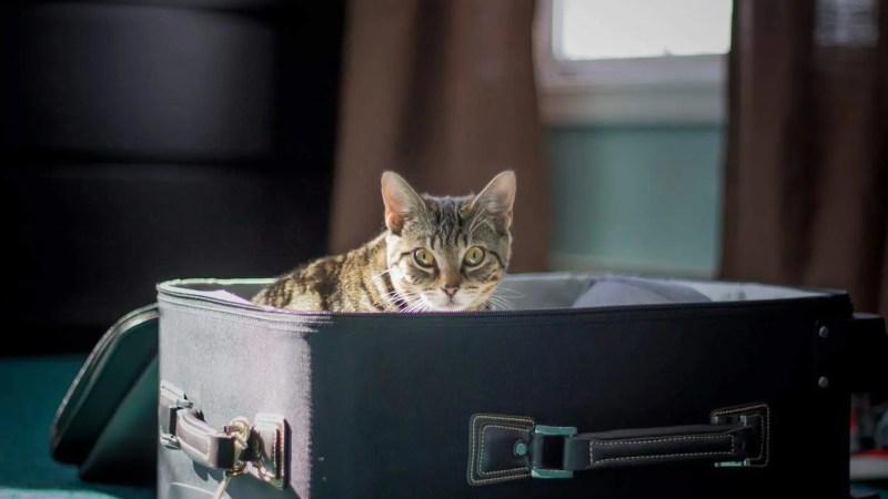 Was wird mit unseren Katzen im Urlaub?