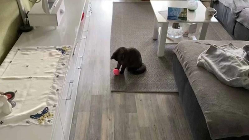 Neues Katzenspielzeug – selbst rollender Ball