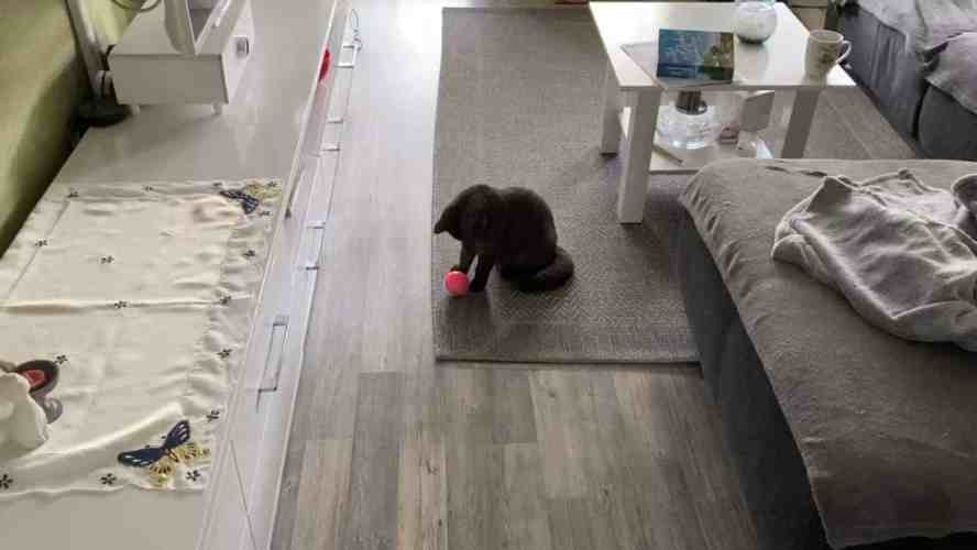 New cat toy – self-rolling ball