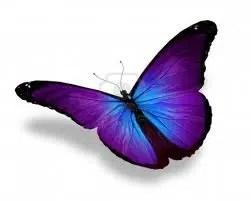 Comment chasser les papillons ?