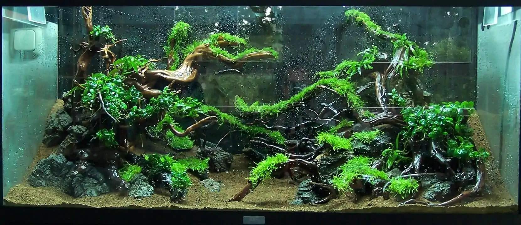 Aquarium Einrichten Beispiele Lid Look Into Acrylic Housing
