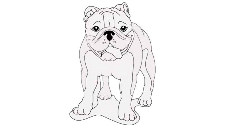 how-to-draw-a-bulldog_14