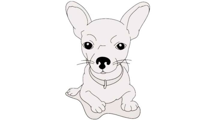 how-to-draw-a-chihuahua_07