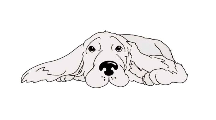 How To Draw A Cocker Spaniel – Images