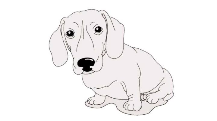 how-to-draw-a-daschund_07