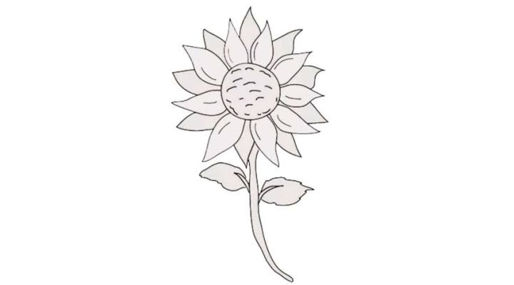 how-to-draw-a-sunflower_07