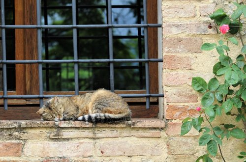 the health benefits of a siesta