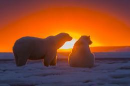 polar-bears-sunset-antarctica-2K-wallpaper-middle-size