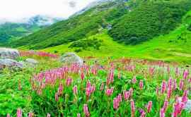 Valley_of_flowers_9