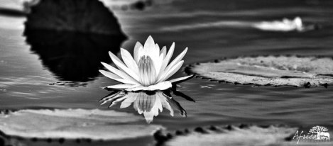 lily-chobe-black-and-white-photography