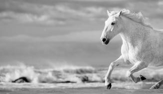1-run-white-horses-iv-tim-booth