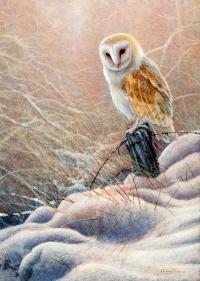 1237-Winter-glow-barn-owl.jpg-nggid041418-ngg0dyn-200x300x100-00f0w010c010r110f110r010t010