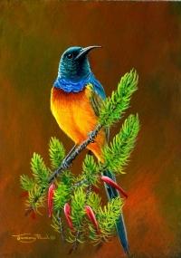 1246-orange-breasted-sunbird.jpg-nggid041347-ngg0dyn-200x300x100-00f0w010c010r110f110r010t010