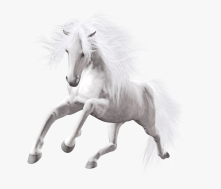 189-1891201_running-white-horse-png-transparent-png
