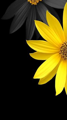 6eb4b8f3087cc461e5fc78bd02a21535--yellow-black-color-yellow