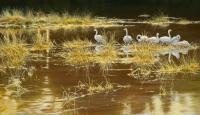 796-whooper-swans-autumn-glow.jpg-nggid03781-ngg0dyn-200x300x100-00f0w010c010r110f110r010t010