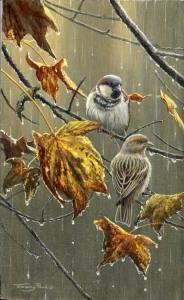 836-sparrows-rain.jpg-nggid03844-ngg0dyn-200x300x100-00f0w010c010r110f110r010t010