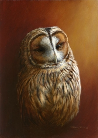 867-tawny-owl.jpg-nggid03954-ngg0dyn-200x300x100-00f0w010c010r110f110r010t010